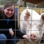 3 ways pork producers learn how to properly care for our pigs
