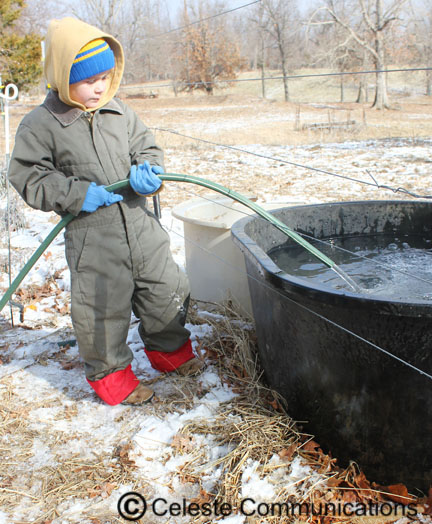 This photo is a few years old but this is still one of my little brother Daniel's jobs, filling up the water trough.